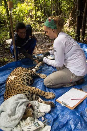 Monitoramento de onças - foto Amanda Lelis-79 (1)